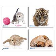 Коврик для мыши Defender Silk, картинки в ассортименте, 230x190x1.6мм (50706)